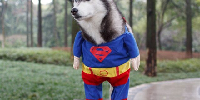 Unique and Cute, Dog Superman