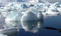 Misteri Penemuan Dua Hewan Aneh di Bawah Antartika