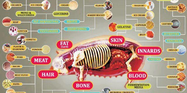 Istilah Makanan Yang Berkaitan Dengan Babi