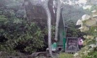 Piton Splashy Dead Appointed Pake Excavators