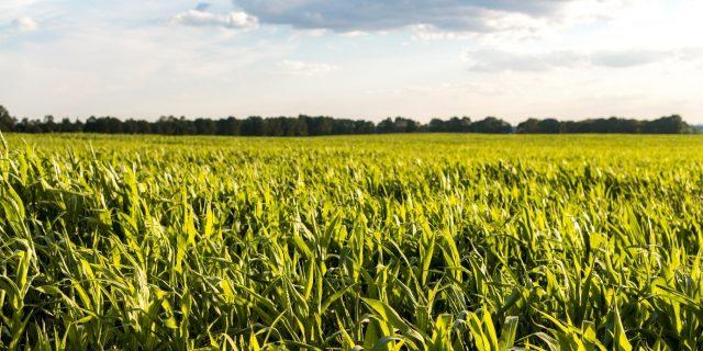 Tak Perlu Modal Gede! Ini 4 Peluang Usaha Agrobisnis yang Menjanjikan